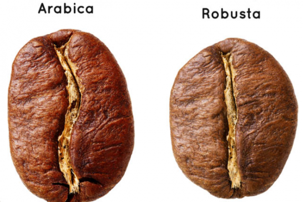 How many types of coffee beans are there?